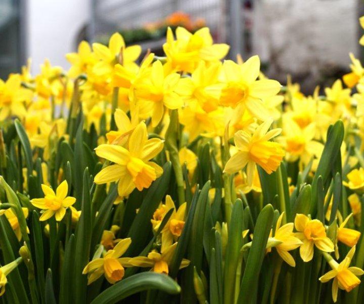 Gärtnerei Gauster | Blumen & Wohnen